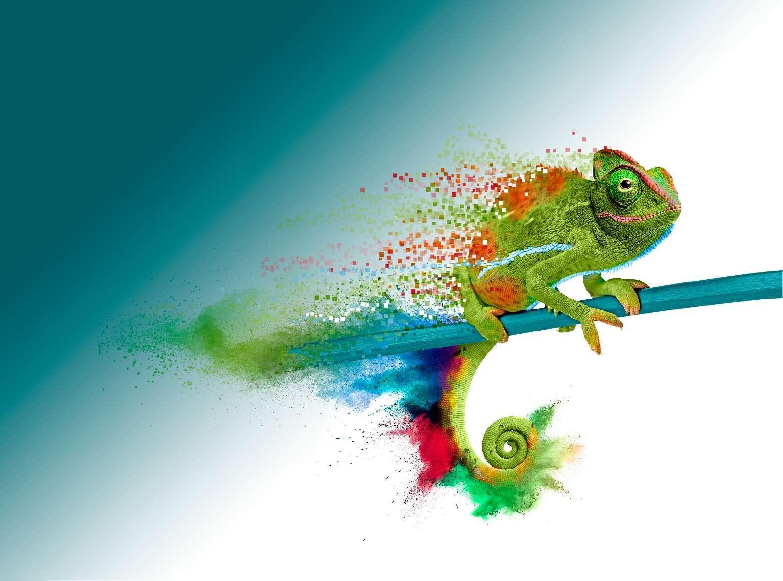 Kameleon-website-header-v2
